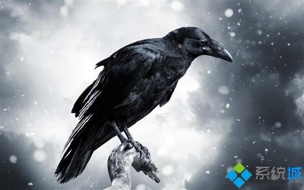 win8/8.1《乌鸦》Ravens and Crows 主题下载